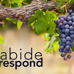 ABIDE & RESPOND: Fruits Out